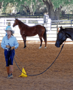 Spectator Tickets – Julie Goodnight Horsemanship Clinic