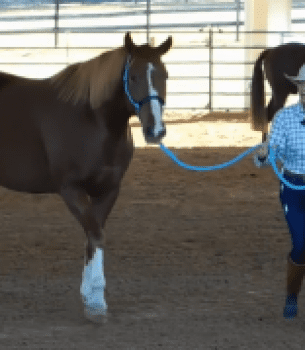 Rope Halter & Lead