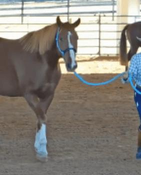 Goodnight Horsemanship Clinic Spectator Tickets