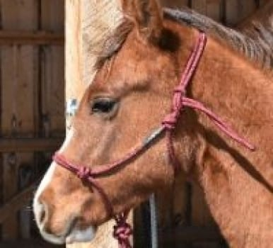 Yearling/Pony Size Rope Halters