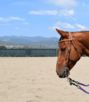 Julie's Favorite Headstall